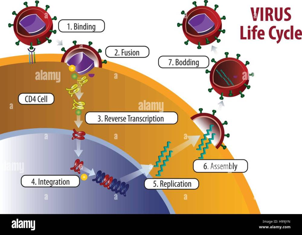 medium resolution of blank diagrams of hiv wiring diagram centre blank diagrams of hiv