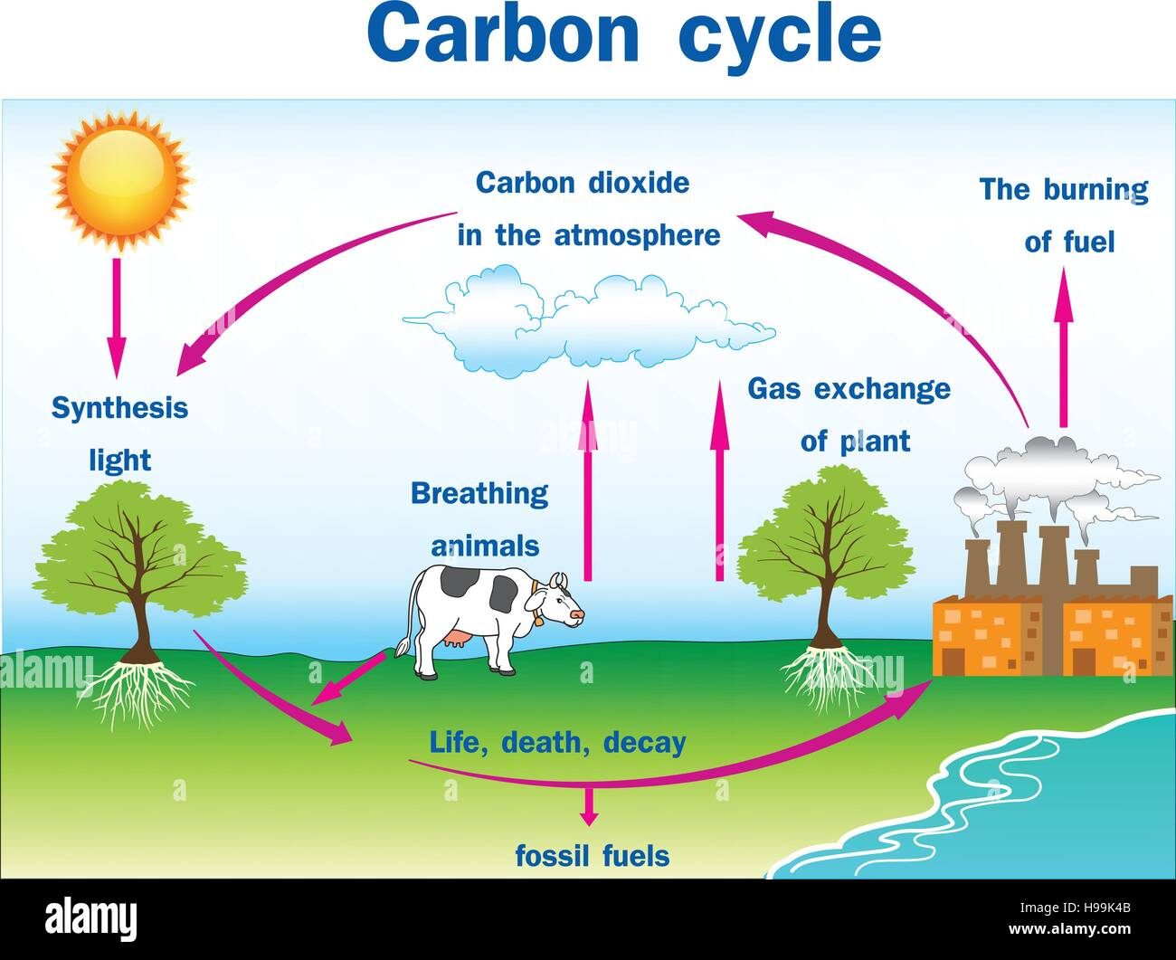 Vector Illustration Of Carbon Cycle Stock Vector Image