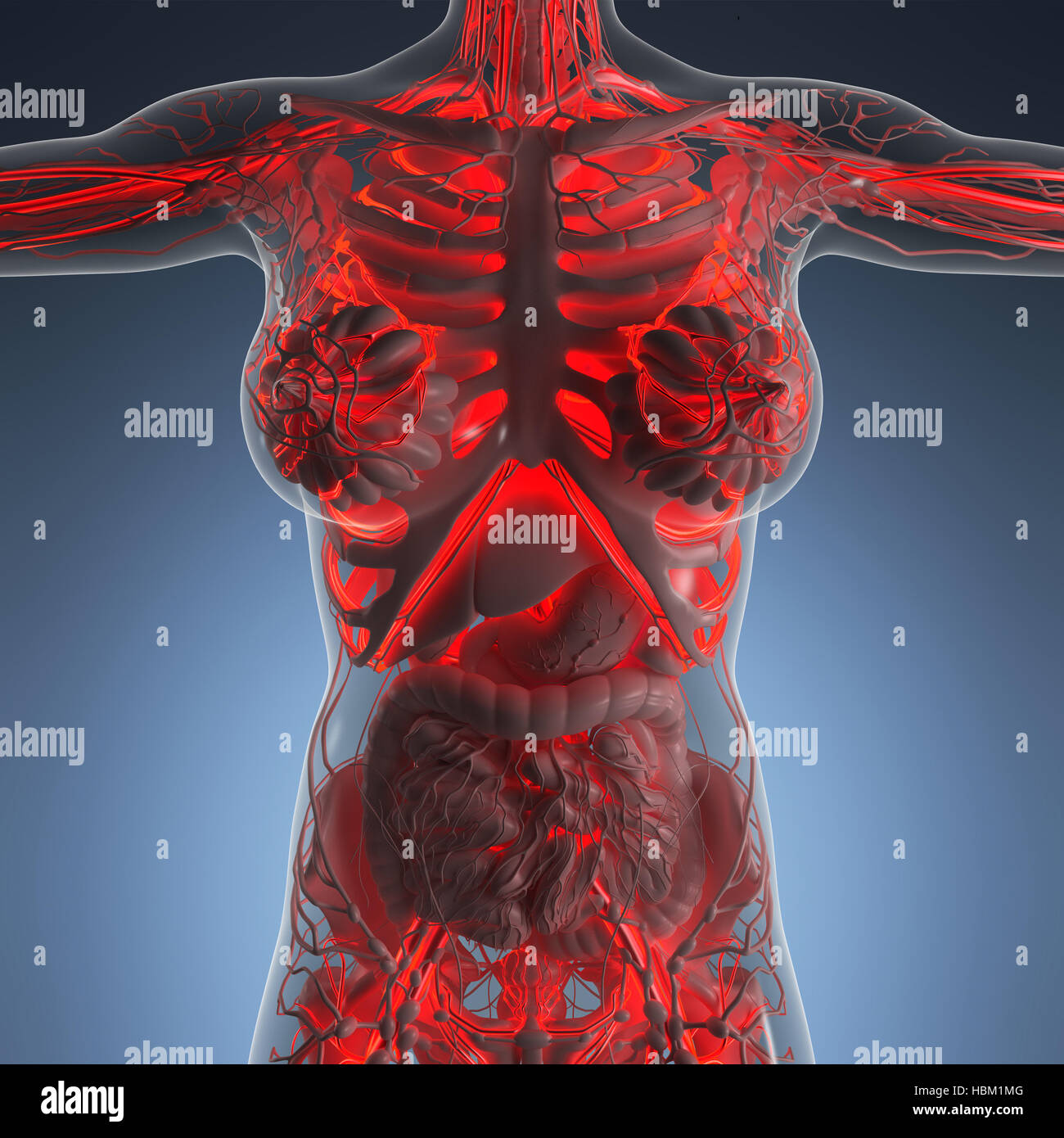 Science Anatomy Of Human Body In X Ray With Glow Blood