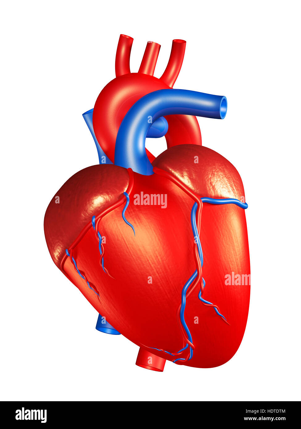 Human Heart High Resolution Stock Photography And Images Alamy