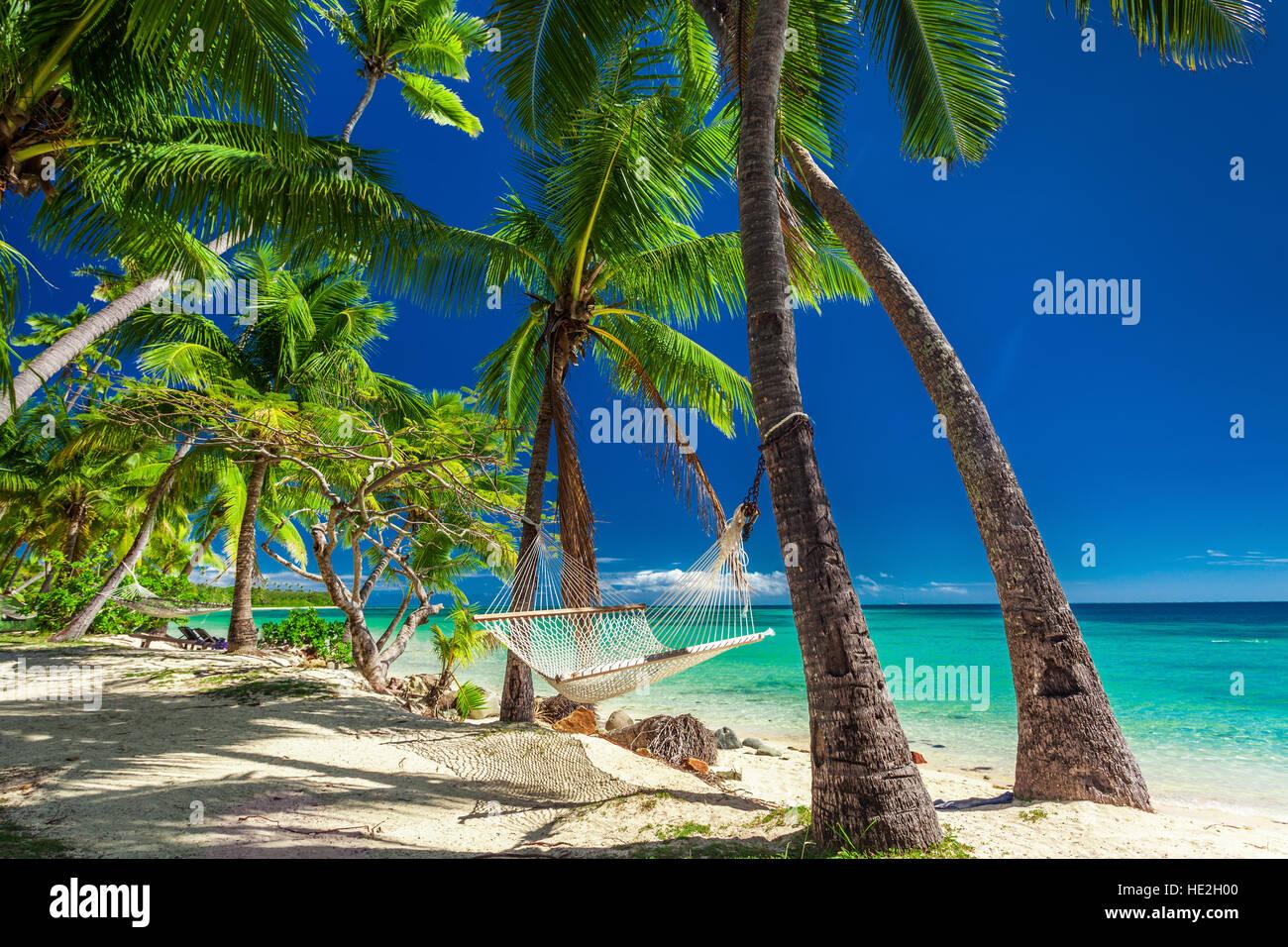 Hammock In Shade Palm Trees Stock Photos Amp Hammock In