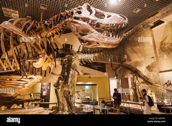 Japan Honshu Tokyo Ueno Park National Museum Of Nature And Stock Royalty Free