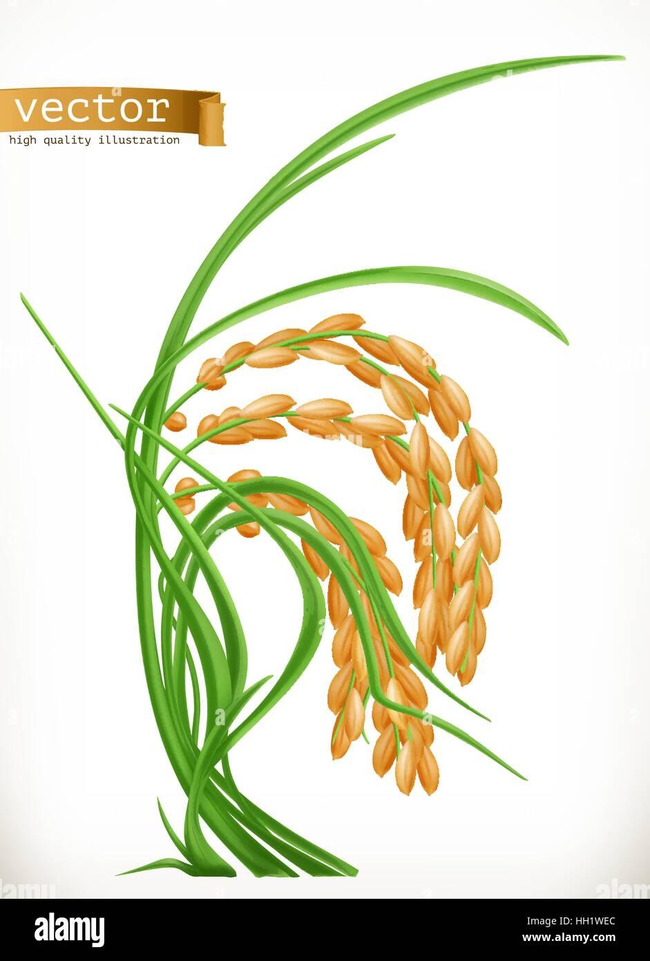 Gambar Padi Vector : gambar, vector, Rice., Vector, Stock, Image, Alamy