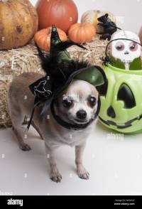 green, hat, dog, dogs, silly, puppy, halloween, costume ...
