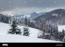 Snowy Fir Trees Stock &