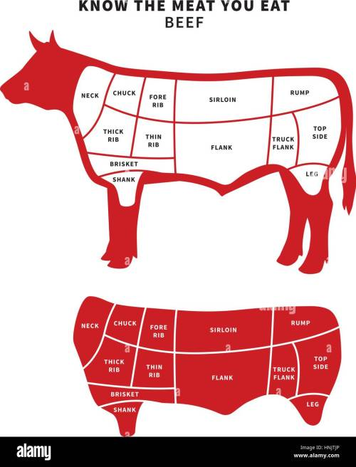 small resolution of red beef cuts diagram for roast and steak vector illustration stock image
