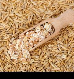 oat flakes in scoop and natural oat grains with husk for background closeup shot heap of organic oat grains with oatmeal in wooden spoon healthy f [ 1300 x 956 Pixel ]