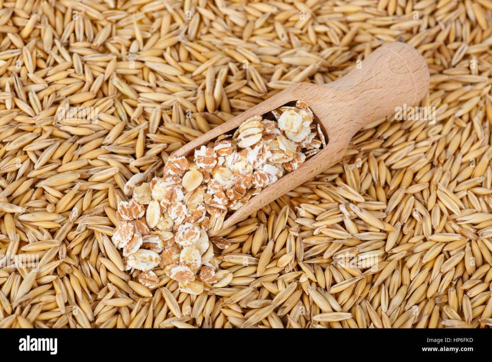 medium resolution of oat flakes in scoop and natural oat grains with husk for background closeup shot heap of organic oat grains with oatmeal in wooden spoon healthy f
