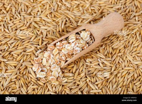 small resolution of oat flakes in scoop and natural oat grains with husk for background closeup shot heap of organic oat grains with oatmeal in wooden spoon healthy f