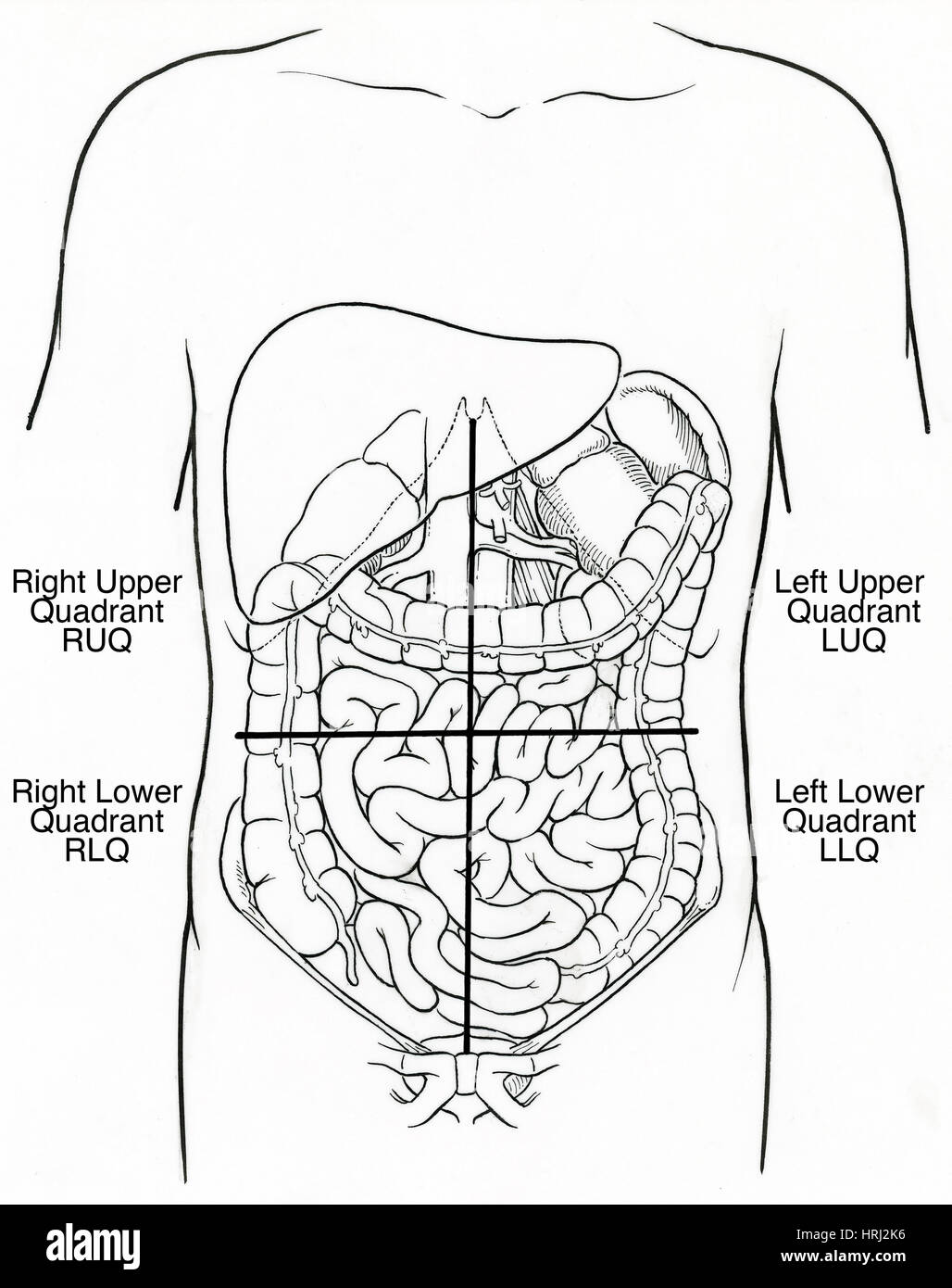 Diagram Quadrants Of The Abdomen