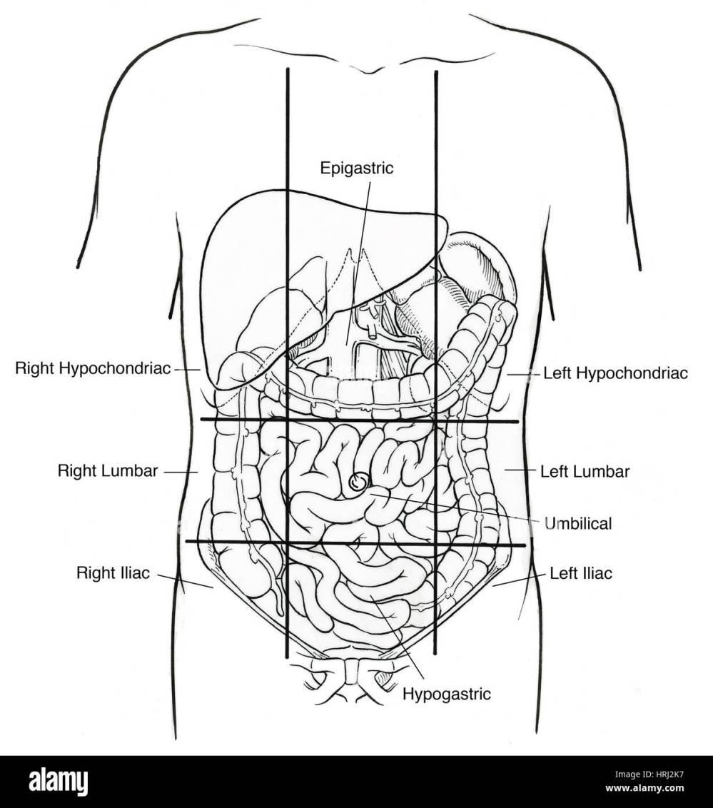 medium resolution of illustration of nine abdominal regions stock image