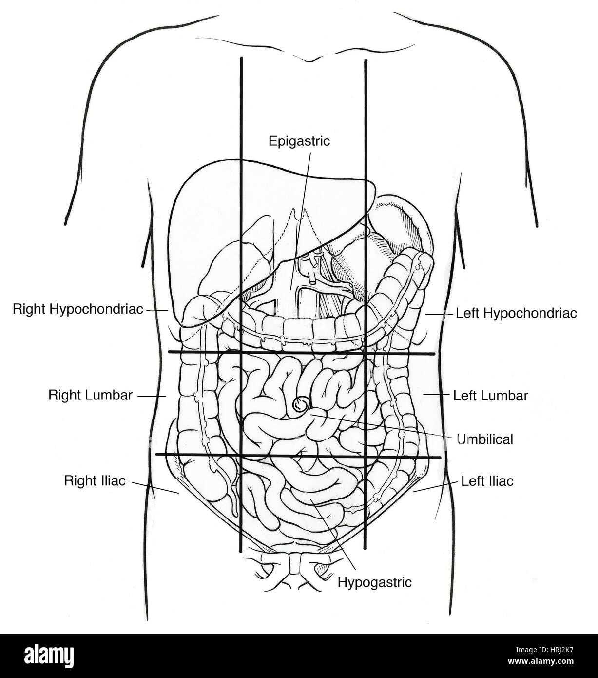 hight resolution of illustration of nine abdominal regions stock image