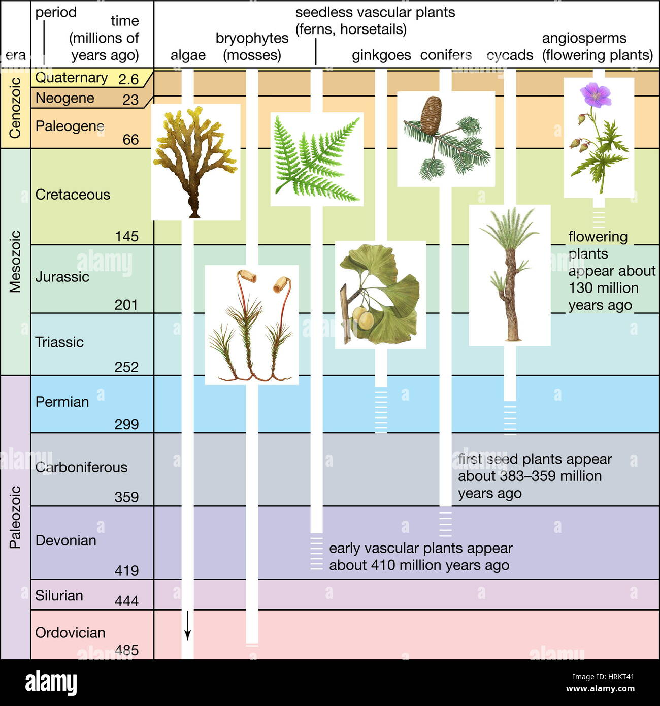 Significant Events In Plant Evolution Geologic Time Scale