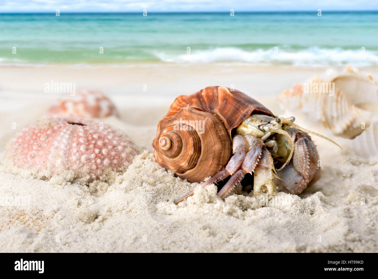 https www alamy com stock photo life hermit crab on the beach in nature tropical sea in thailand photo 135429489 html