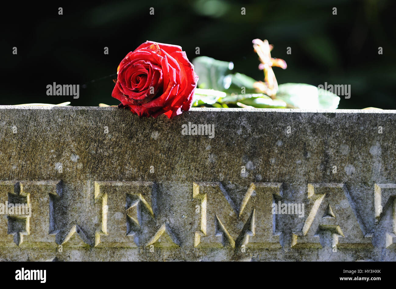 Red Rose On Gravestone On Stock Photos & Red Rose On Gravestone On