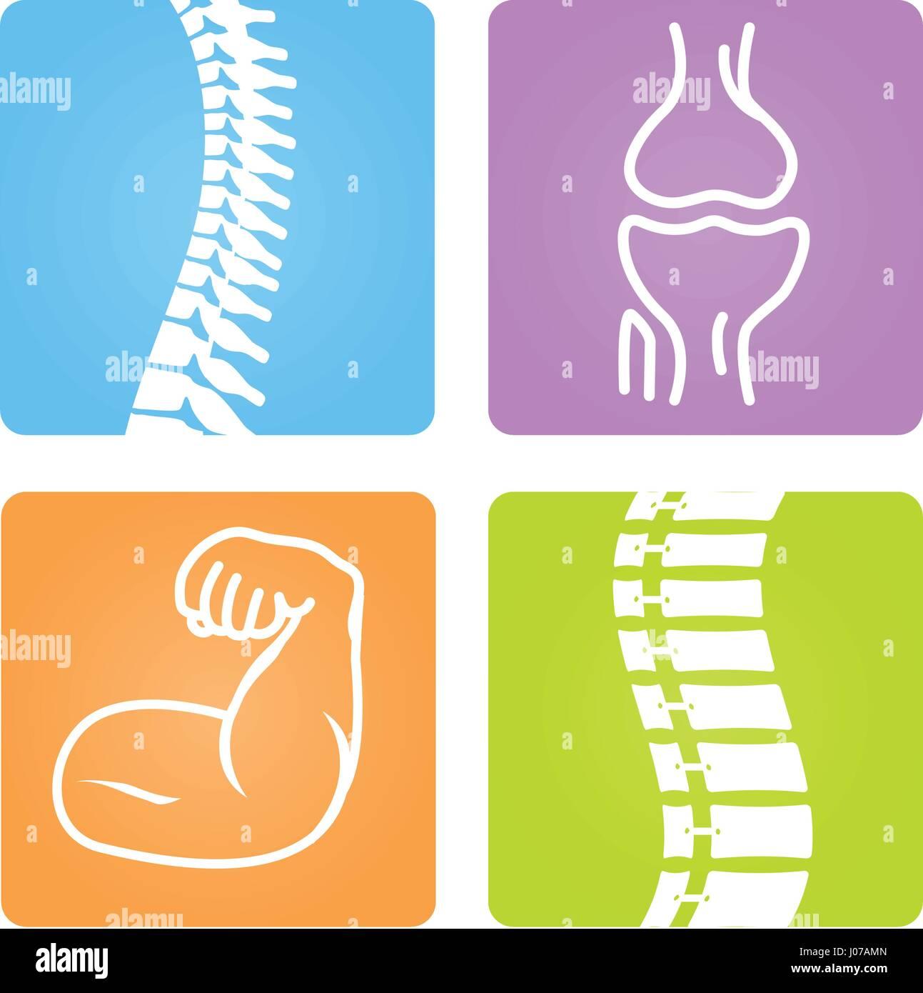 2d vector spinal column