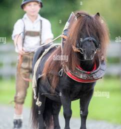 bavarian boy with shetland pony in collar harness bavaria germany [ 866 x 1390 Pixel ]