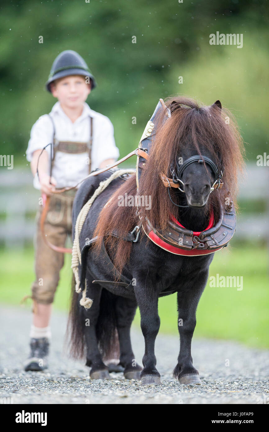 hight resolution of bavarian boy with shetland pony in collar harness bavaria germany