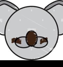 drawing koala face animal stock image [ 1300 x 892 Pixel ]