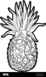 pineapple tropical fruit tasty outline Stock Vector Image & Art Alamy