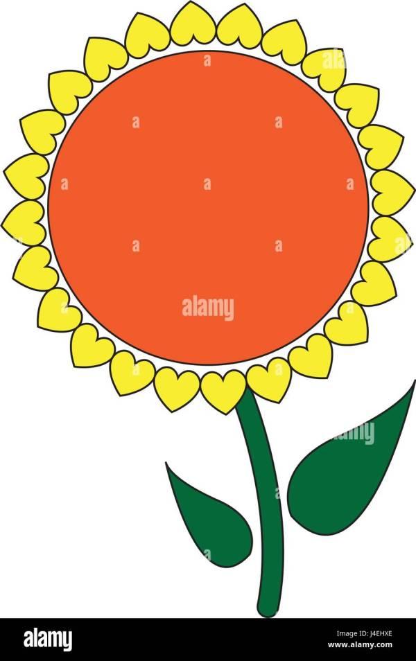 Sunflower Stem Stock Vector - Alamy