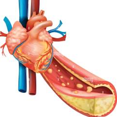 Healthy Heart Diagram 2000 Gmc Sierra 1500 Headlight Wiring Showing Human And Fat Veins Illustration