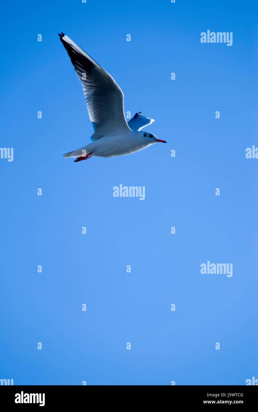 blue flight bird birds