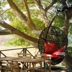 Relaxed In Coffee Shop With A Big Tree And Red Swing Stock Photo Alamy