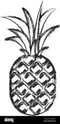 Pineapple Silhouette