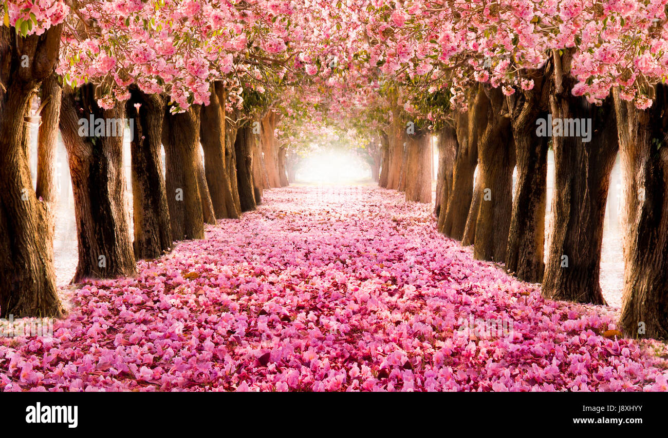 Sakura Falling Live Wallpaper Falling Petal Over The Romantic Tunnel Of Pink Flower