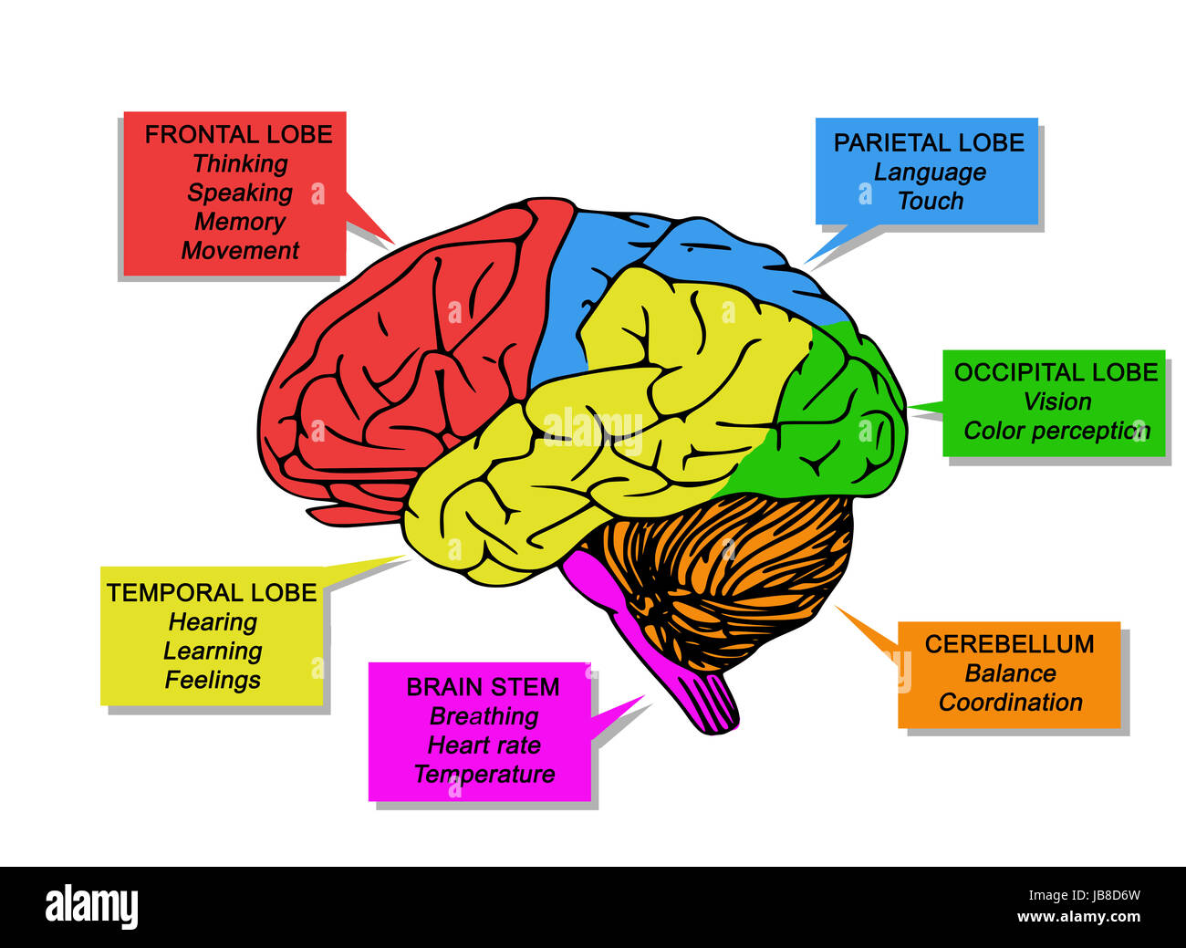 Human Brain S Functions Stock Photo