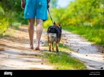Man Walking Barefoot With Dog Dirt Road In Summer