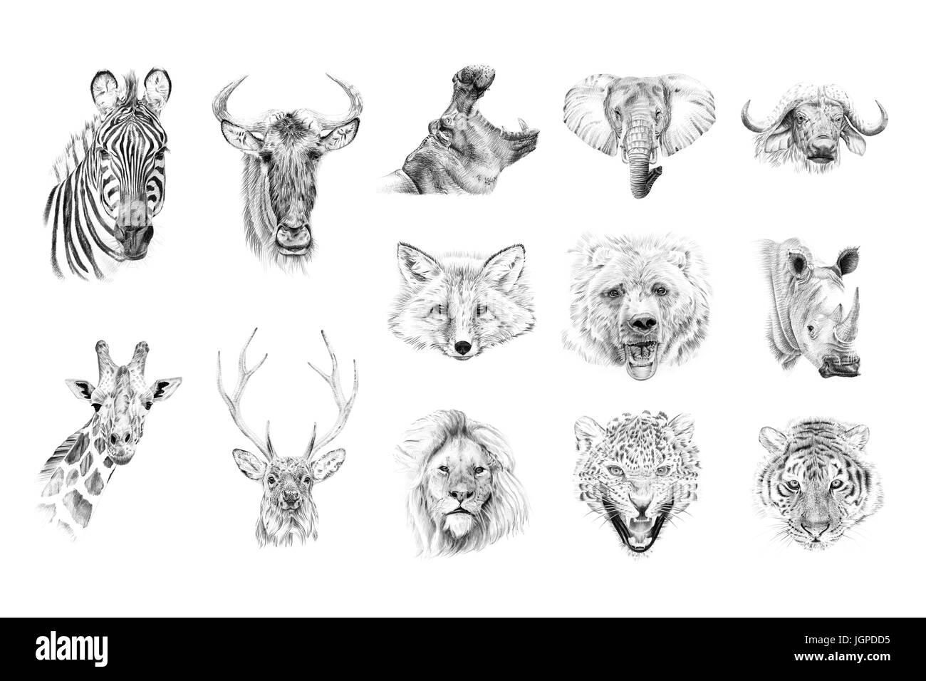 portrait of animals drawn