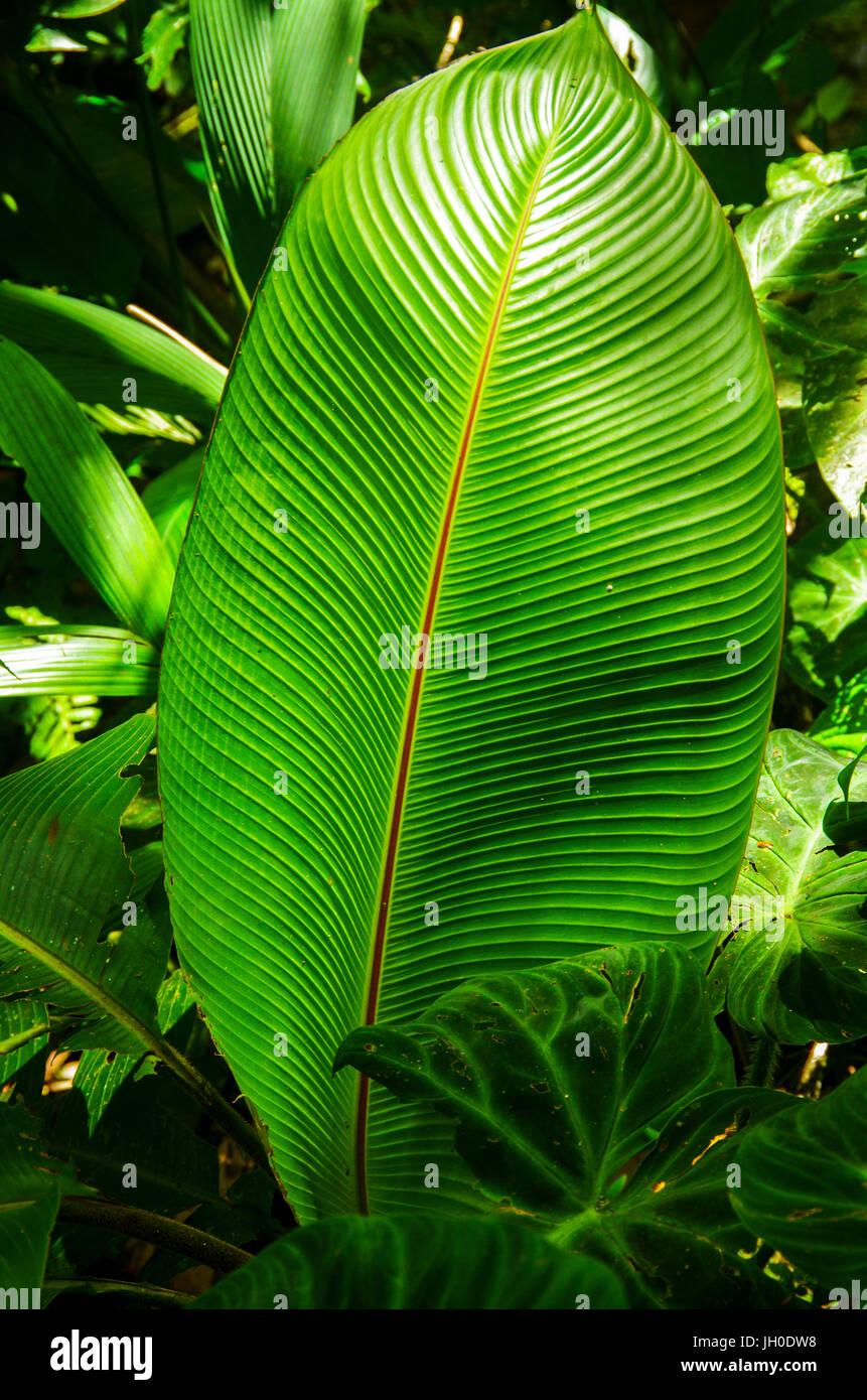 big green leaf in