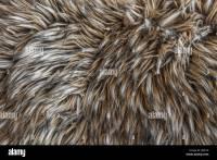 Animal Carpet - Carpet Vidalondon