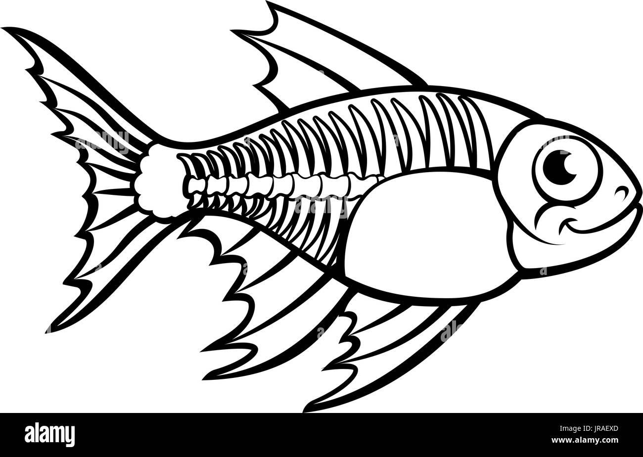 Cartoon X Ray Fish Stock Photos Amp Cartoon X Ray Fish Stock Images