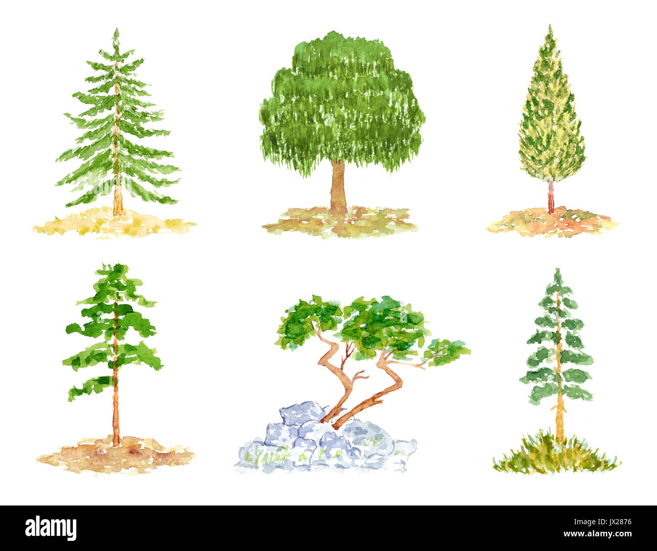 The tree has no leaves, but it does have. Set Of Cute Deciduous And Coniferous Trees Watercolor Hand Drawn And Painted Isolated On White Stock Photo Alamy