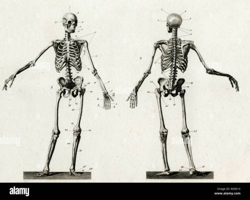 small resolution of diagram of the human skeleton from front and back date