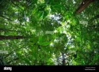 Rainforest Canopies Stock Photos & Rainforest Canopies ...