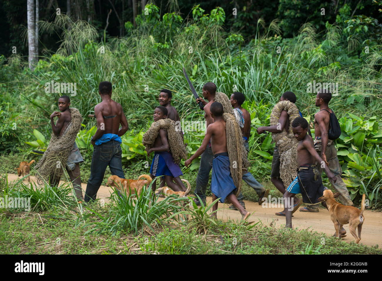 There is always something new coming out of africa. Pygmies Congo High Resolution Stock Photography And Images Alamy
