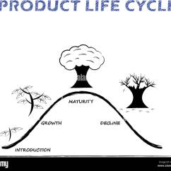 Human Life Cycle Stages Diagram Pontiac Radio Wiring Black White Product Is Drew By Pencil On Background As Tree Growing Four Introduction Growth Maturity Decline