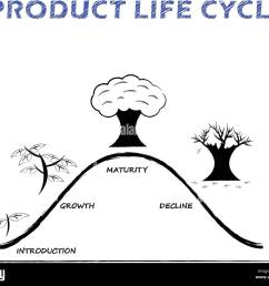black white product life cycle diagram is drew by pencil on white background as tree growing four stages introduction growth maturity decline  [ 1300 x 1102 Pixel ]