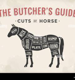 cut of meat set poster butcher diagram scheme horse stock image [ 1300 x 1026 Pixel ]