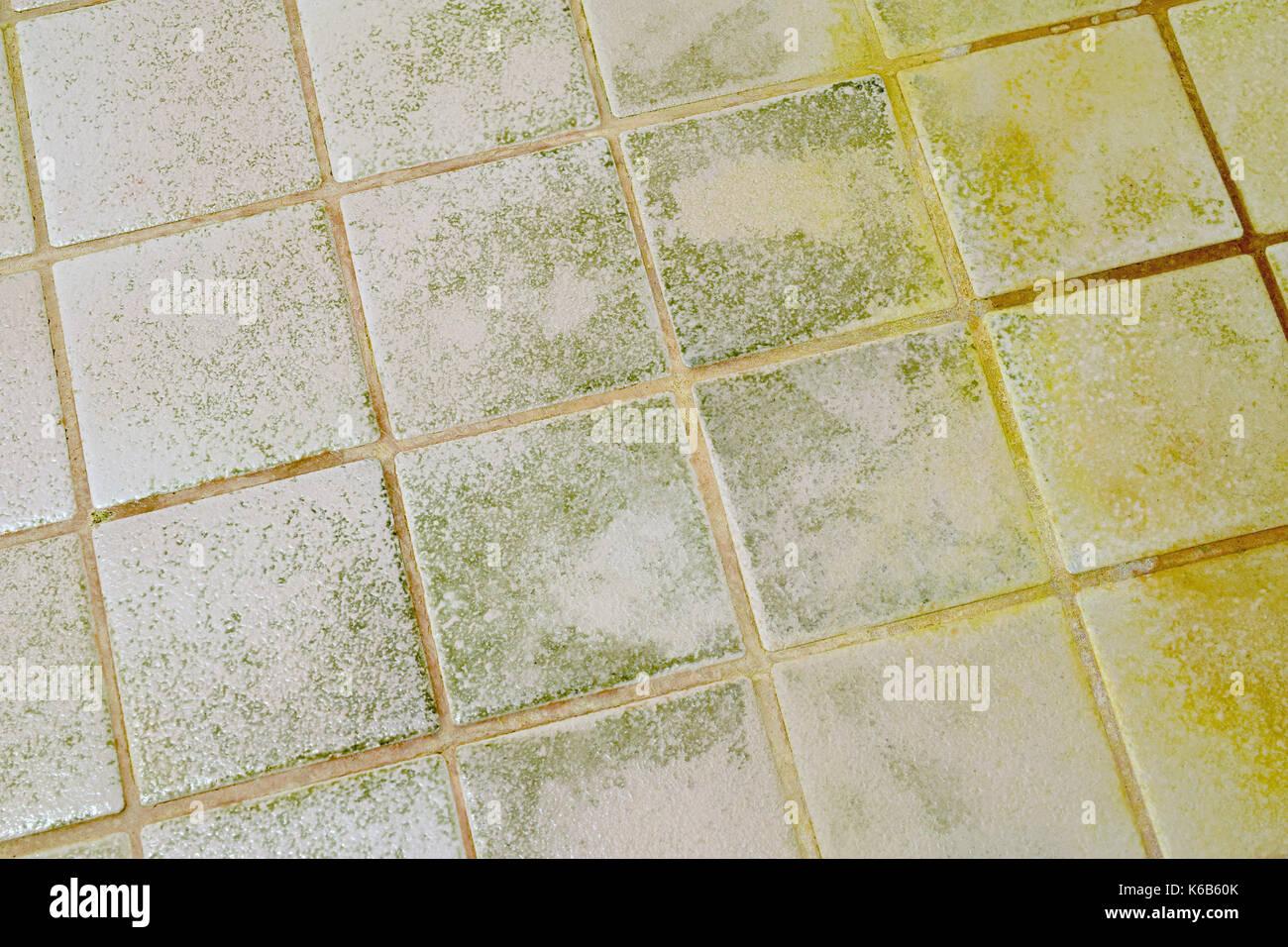 https www alamy com mold on the bathroom tile floor image158827443 html