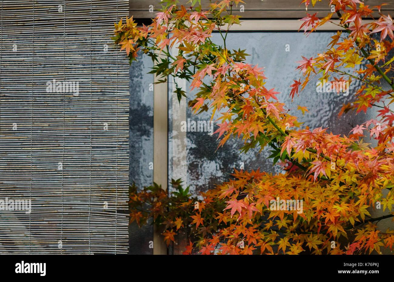 Bamboo Curtain Stock Photos & Bamboo Curtain Stock Images
