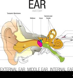 ear anatomy with parts name vector image [ 1300 x 1008 Pixel ]