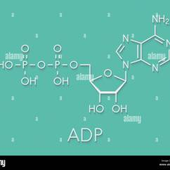 Adp Molecule Diagram Labeled Car Work Light Wiring