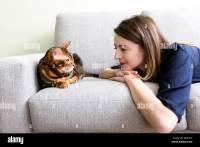 Warm Living Room Cat Stock Photos & Warm Living Room Cat