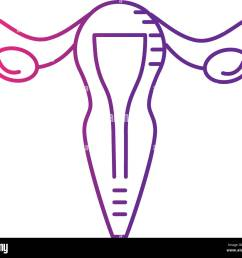 line uterus fallopian tubes anatomy female stock image [ 1300 x 1136 Pixel ]