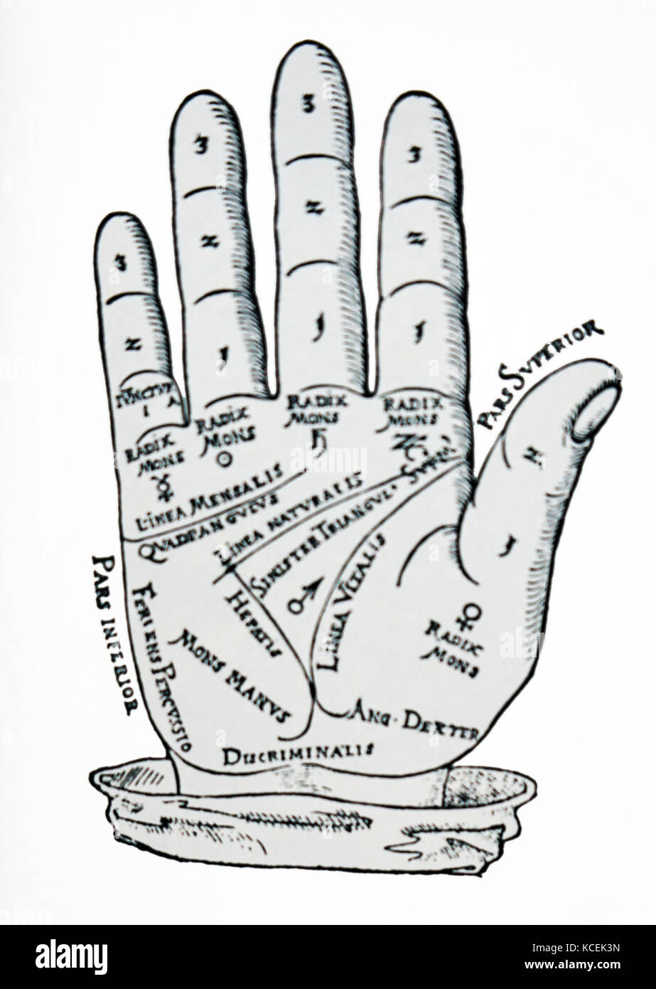hight resolution of a palmistry chart used in the foretelling of the future through the study of the palm